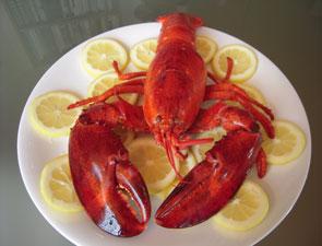 lobster_c_295x225
