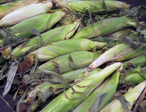 corn_295x225